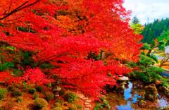 最も美しかったモミジの樹 (津和野 旧堀氏庭園)