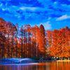 碧空とメタセコイアの紅葉 (さいたま市 別所沼公園)