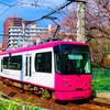 桜の木の側を走る都電荒川線 (新宿区西早稲田)