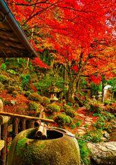 紅色に包まれる庭園風景 (津和野 旧堀氏庭園)