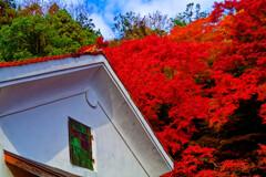 極彩色に染まる紅葉 (津和野 旧堀氏庭園)