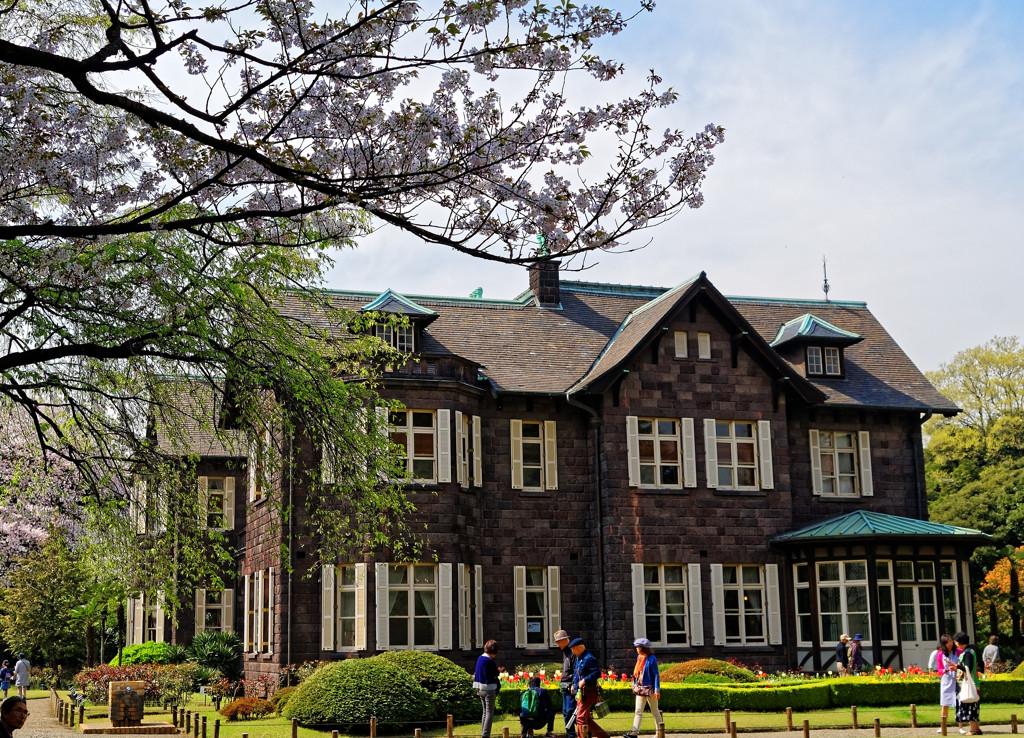 旧古河庭園の桜と洋館