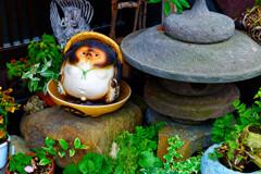 ほっこりするな~ 狸の置物 (山口県萩市)