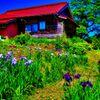 木間菖蒲園の情景 (萩市)