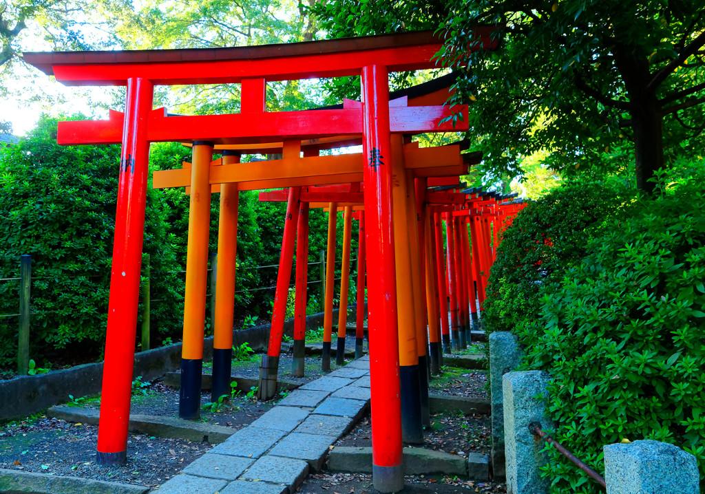 紅のトンネル 千本鳥居 (根津神社乙女稲荷)