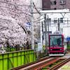 カメラマン勢ぞろいの中、満開の桜の中を行く都電荒川線