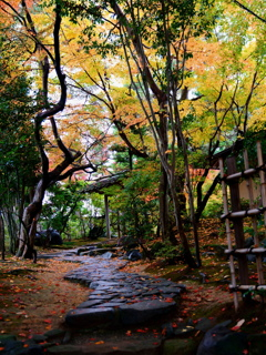秋雨の茶室