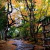 秋雨の茶室円山庵