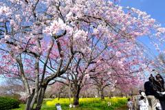 色彩鮮やかな春の訪れ
