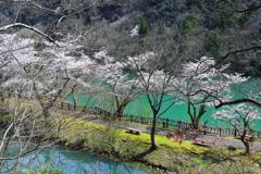 桜の水上遊歩道