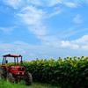 四季〜ひまわり畑の休日