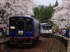 能登鹿島駅~桜