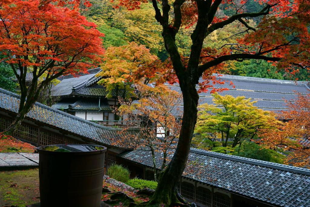 雨上がりの永平寺
