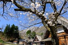 合掌造り集落の春