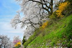 春の彩河原遊歩道
