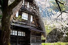 合掌造り桜の光景