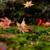 苔と落ち葉の饗宴