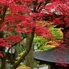 禅寺の紅葉