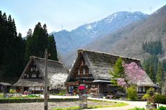 菅沼集落桜の咲く頃