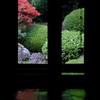 霧島ツツジの庭