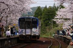 能登鹿島駅~桜舞う