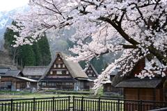 菅沼集落の春