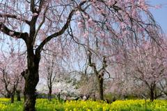 木々の営み春