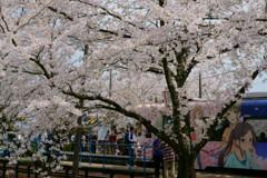 アニメ列車と桜駅の賑わい