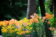 森と百合の色彩