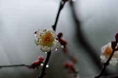雨に濡れて-Ⅲ