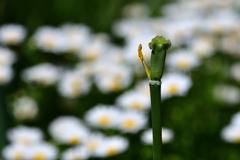 Tulip-Ⅱ