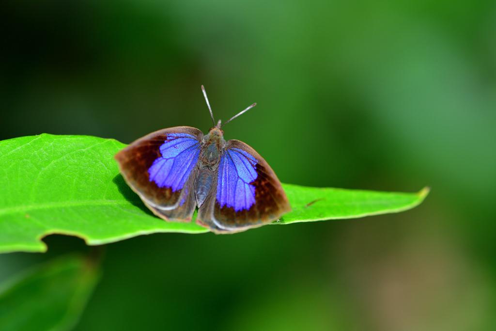 鮮やかな紫色の紋-Ⅱ