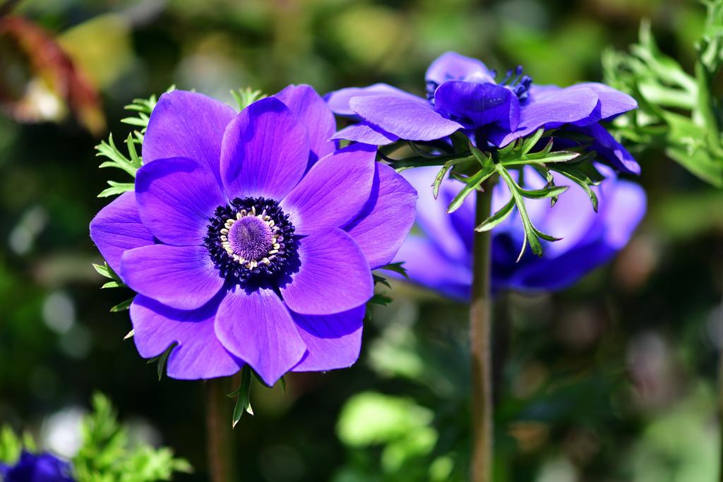 春の花-Ⅳ