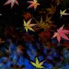 秋の落とし物-Ⅲ