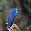 幸せを呼ぶ青い鳥-Ⅴ