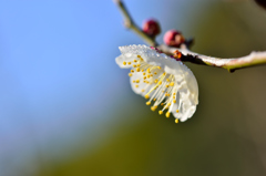 morning dew-Ⅱ
