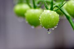 トマトと雨と雷-Ⅱ