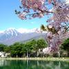 千人塚公園の桜