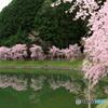 美杉の春 A