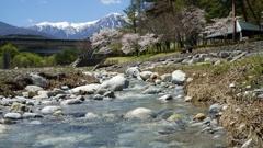 川 上伊那の春 与太切公園