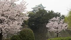 名古屋城の春