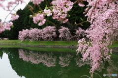 美杉の春 B