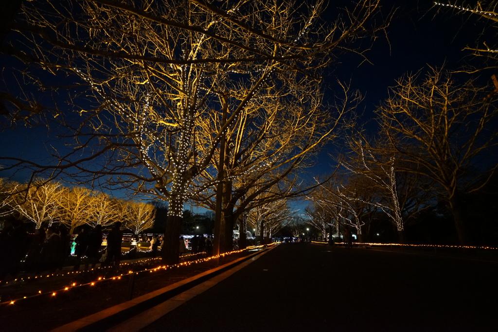 昭和記念公園_イルミネーション7