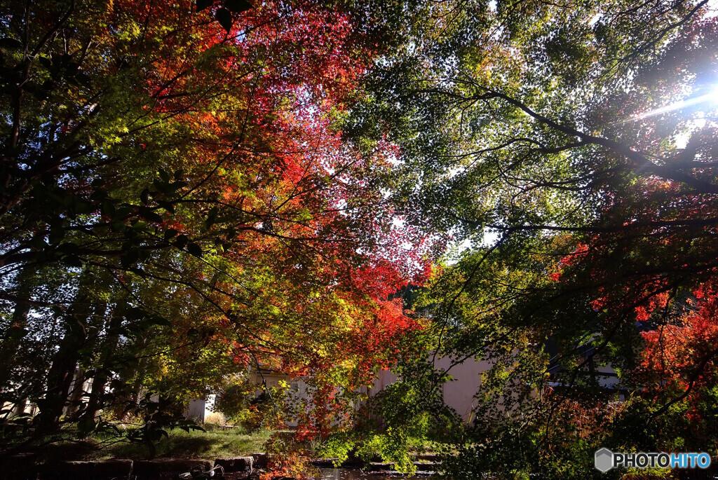 霜月の紅葉✿水車小屋