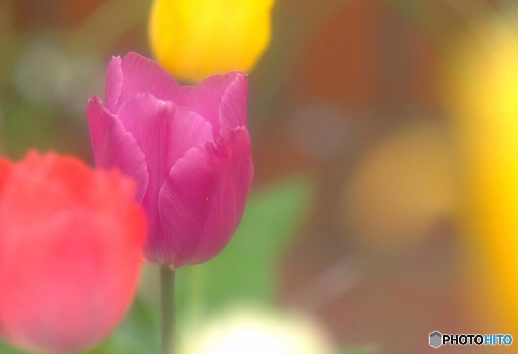夢の続き✿春Story