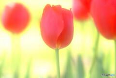 春満喫✾旅人