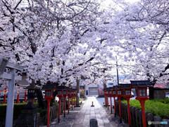 六孫王神社の桜2020