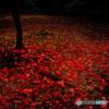 漆黒の紅葉