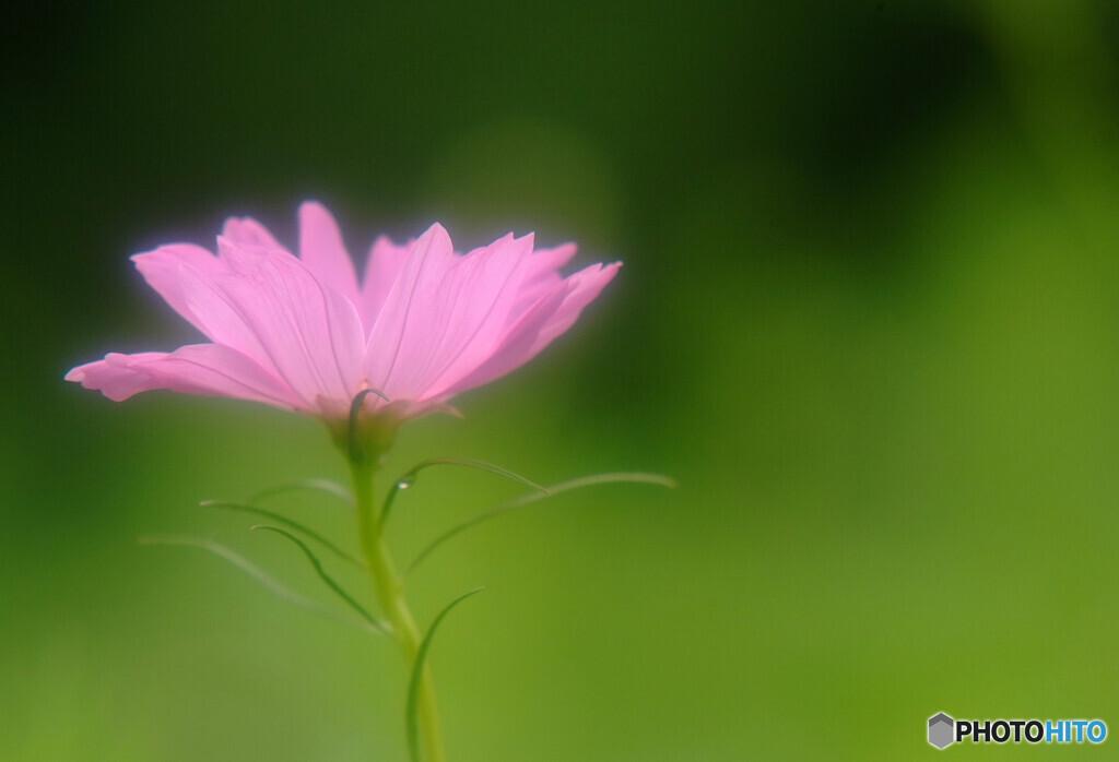 母に捧げるこの花を✾