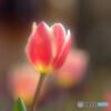 春の誘惑✿華